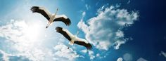 Facebook Timeline Cover Birds - Storks