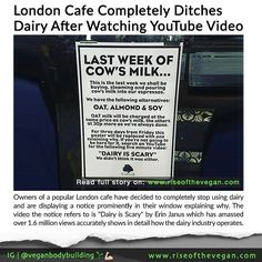 London cafe ditches dairy after watching Dairy is Scary a YouTube video