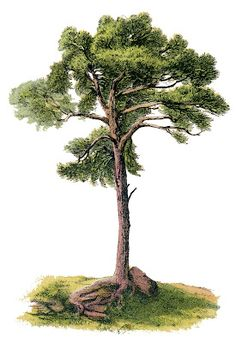 Vintage Image - Gorgeous Tree - The Graphics Fairy