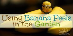 Using Banana Peels in the Garden » Survival at Home