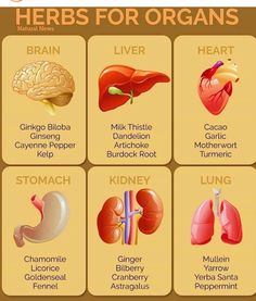 Natural Home Remedies Herbs for organs. Healing Herbs, Medicinal Plants, Natural Healing, Au Natural, Lemon Benefits, Coconut Health Benefits, Natural Health Remedies, Herbal Remedies, Natural Medicine