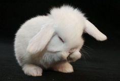 Little Whity bunny =) Via : shangralafamily