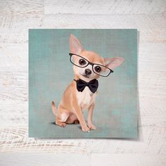 Portrait of an elegantMr. Chihuahua with glasses on by SparaFuori, $20.00