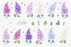 Lilac. Watercolor collection by OctopusArtis on @creativemarket