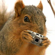 Squirrel Shoots Back