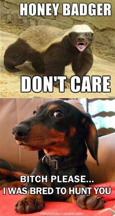 Wiener Dog Blog: August 2014                                                                                                                                                      More