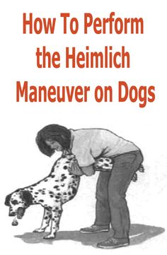 Only use the Heimlich maneuver if you are certain your dog is choking on a foreign object, as performing the maneuver can cause additional injury. Heimlich Maneuver For Dogs, Dog Heimlich, Pet Dogs, Dogs And Puppies, Doggies, Cardiopulmonary Resuscitation, Medication For Dogs, Dog Health Tips, Sick Dog