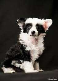 Image result for crustie dog