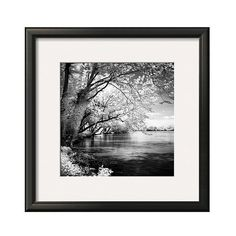 Art.com ($40) ❤ liked on Polyvore featuring home, home decor, wall art, variation parent, black and white wall art, tree home decor, tree wall art, black white home decor and target wall art