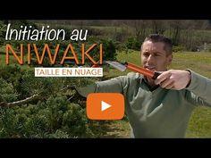 Niwaki - Taille en nuage - Taille japonaise - Arbre en nuage - Chroniqueur jardin Franck PROST - YouTube
