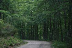 Estrada entre florestas na região de Ancares, província de Lugo, Galícia, Espanha. http://viajaresunreflejodelplacer.blogspot.es/img/1000aj25.jpg
