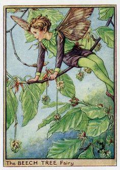 Beech Tree Flower Fairy Vintage Print c1950 by TheOldMapShop