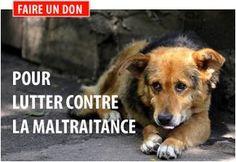 COMBATER LA MALTRAITENSE PENSER A C EST CHIEN QUI ENDUR LE PIRE VOUS N'AIMERAIS PA QUE SA VOU ARIVE NI A VOTRE FAMILLE ET A VOS AMI !!!!!!! ✌
