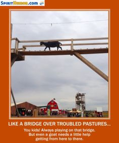 So who's smarter: the humans who built the bridge or the goats who let them to all the work?