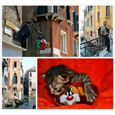 #rcnocropmade #sweetness #love #venice #tour #beautiful #colors #city #landscape #alleys #foreshortening #homes #river #riverside #water #tourinlove #pace #gondola #spectacular #fabulous #photo #light  #windows #sushine #sun #travel #road #walk #excursion #cat