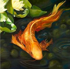 A beautiful butterfly Koi. Can't wait for my butterfly koi to get this… Koi Fish Pond, Fish Ponds, Koi Art, Fish Art, Beautiful Fish, Beautiful Butterflies, Koi Painting, Watercolour Painting, Butterfly Koi