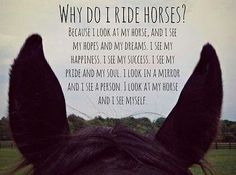 Image result for horse quotes