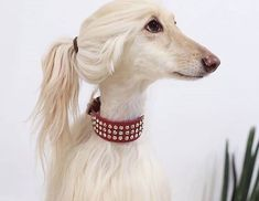 A classy little lady! Animals And Pets, Funny Animals, Cute Animals, Beautiful Dogs, Animals Beautiful, I Love Dogs, Cute Dogs, Afghan Hound, Collie Dog