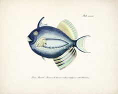 Vintage Fanciful Fish Illustration Natural by vintagebytheshore, $15.00