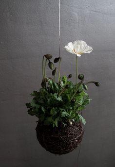 La poésie d'un jardin suspendu