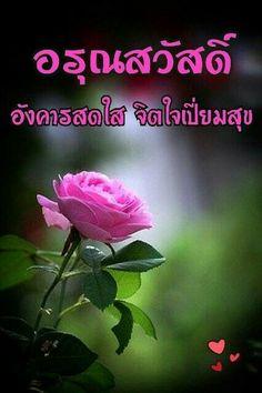 วันอังคาร Good Morning Tuesday, Just Saying Hi, Good Morning Flowers, Happy Day, Good Day, Don't Forget, Rose, Plants, Beautiful Flowers