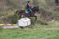 Sierra competing in Hunter Trials April 2017. VIDEO: https://www.youtube.com/watch?v=6X9kTctqX9I #loveirishhorses #horseforsale
