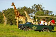 Pretty Much intense but it was a lot of Fun adventure Actually :D Center Park, Port Elizabeth, Places Of Interest, African Safari, Amazing Adventures, South Africa, Giraffe, To Go, Vacation