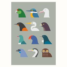 Birds of New Zealand by Hamish Thompsen