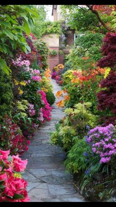 Camino d flores