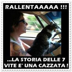 Funny pictures about Road Rage Cat. Oh, and cool pics about Road Rage Cat. Also, Road Rage Cat. Funny Animal Memes, Funny Animals, Cute Animals, Funny Memes, Funny Signs, I Love Cats, Crazy Cats, Cute Cats, Cat Fun