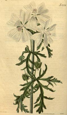 v.49 (1821-1822) - Curtis's botanical magazine. - Biodiversity Heritage Library