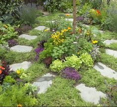This small garden design – which includes lawn chamomile, thyme, sage and cotton lavender – features medicinal and culinary herbs.