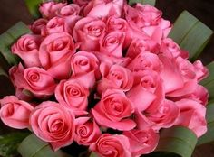 Absolutely beautiful roses