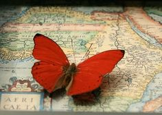 love the red butterfly against the world map