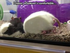 Funny Animals Of The Day - 30 Pics