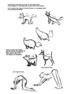 Cat Anatomy Notes– The Spine : sydneypadua.com