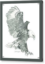 Bald Eagle In A Dive Acrylic Print by Robert Wilson