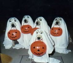I'm just wondering how they got these dogs to all sit still in their ghost costumes... ah... nobody gives a sheet!