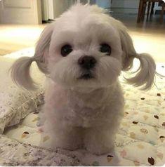 So Cute White Puppy Cuties Cute