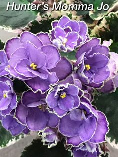 A Customer's Guide To Herbal Dietary Supplements On The Net African Violet, Hunter's Momma Jo Stnd, New Introduction Bushes And Shrubs, Violet Plant, Saintpaulia, Slippery When Wet, Sweet Violets, St Pierre And Miquelon, Blooming Plants, Dark Eyes, Love Flowers