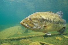 Spring Fishing: 10 Tips to Catch Spawning Bass | Field & Stream