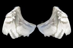 White angel wing stock photography
