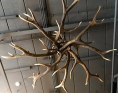 Stylish chandelier made stag antlers, antler chandelier - Lamps made of antlers, Antler chandelier - Lamps, chandeliers. - De Jong Interieur