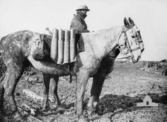 France. c. 1917. A British Army soldier riding a mule and leading another mule carrying   field gun ammunition across muddy country unsuitable for normal transport. (Donor   British Official Photograph D477).     Australian War Memorial, Canberra (Australia).