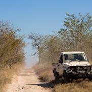 Tracking Instincts   krazywithtravel African Wild. Sabi Sand. Kruger National Park.