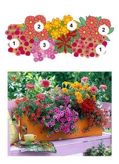 Blumenkasten mit Zauberglöckchen, Zinnien, Studentenblume und Feuer-Salbei