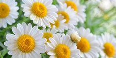 Sonnenallergie | Das ist die beste Salbe gegen Juckreiz | Praxisvita