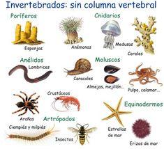 Clasificación de los animales invertebrados