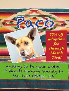 Paco is waiting for a forever home at Woods Humane Society in San Luis Obispo, CA