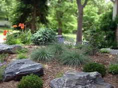 Front yard, blue fescue mixed with rocks in pairings of threes.